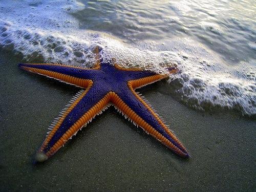 starfish syndrome, bad girls bible, sean jameson