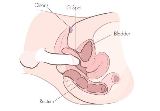 Anatomy of a g-spot orgasm