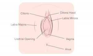 The Truth: What A Normal Vagina Looks Like