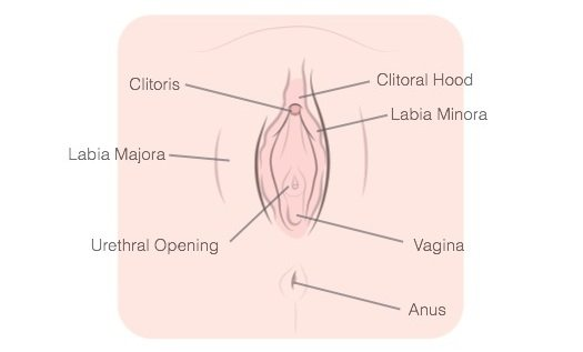 Female anatomy cum