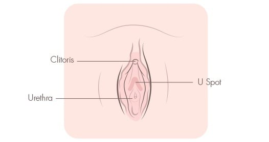 masturbation diagrams Female
