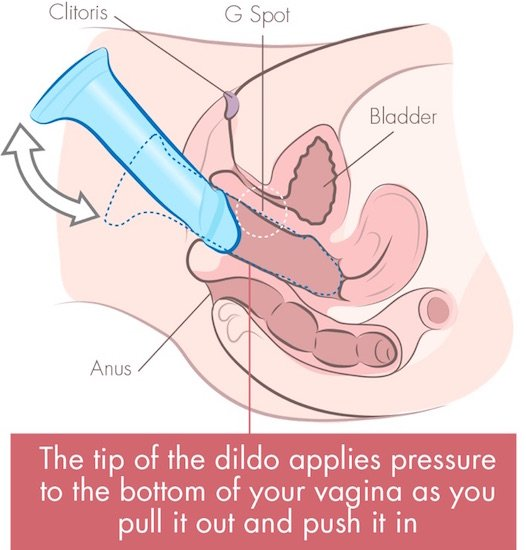 dildo on bottom of vagina cross section illustration