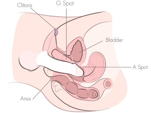 Vaginal g spot orgasm and sex