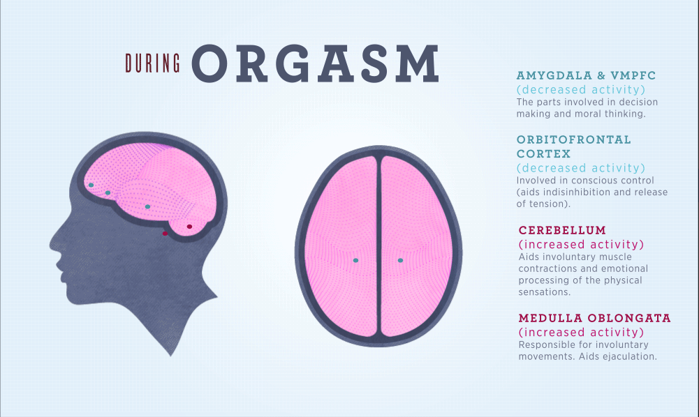 Cross section of the human brain during orgasm, indicating how brain activity is in different regions is altered